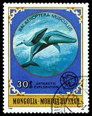 Vintage  Postage Stamp. Giant Blue Whale.