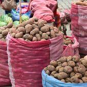 Potato Stand on Street Market in La Paz, Bolivia