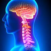 C2 Disc - Cervical Spine