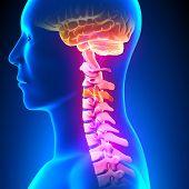 C3 Disc - Cervical Spine