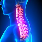C7 Disc - Cervical Spine