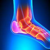 Ankle Bones Anatomy - Pain Concept