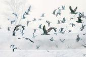 Seagulls Flying Near Shore
