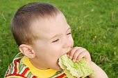 The boy hungrily eats lettuce
