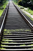 Railway tracks in jungle