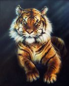 A Beautiful Oil Painting On Canvas Of A Mighty Tiger Looking Up From Black Background