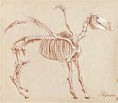 An Hand Drawn Vector: Pegasus