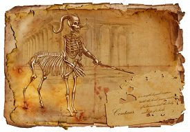 pic of centaur  - Illustration of a series of legendary animals and monsters  - JPG
