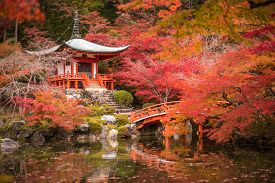 foto of garden-art  - Daigoji temple in maple trees momiji season Kyoto Japan - JPG