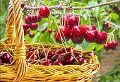 foto of cherries  - Ripe red berries of sweet cherries in a wicker basket close - JPG