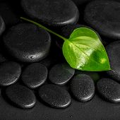 image of calla lily  - spa concept of green leaf Calla lily on black zen stones with dew closeup - JPG