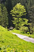 foto of bavaria  - Beech on the mountain Breitenstein in the Alps in Bavaria Germany - JPG