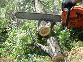 image of chainsaw  - sawing wood with a chainsaw - JPG