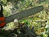 pic of firewood  - sawing wood with a chainsaw - JPG