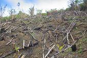 pic of deforestation  - Deforestation environmental damage - JPG