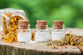 stock photo of naturopathy  - Three bottles of homeopathy globules and healthy herbs - JPG
