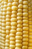 stock photo of corn cob close-up  - Close up of bright yellow kernels on a sweetcorn cob. ** Note: Visible grain at 100%, best at smaller sizes - JPG