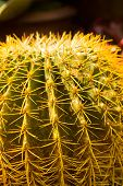 image of thorns  - Extreme closeup of cactus thorns in garden - JPG