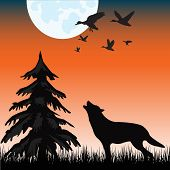 stock photo of wolf moon  - The Silhouette of the wolf in night wood - JPG