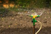 picture of sprinkler  - Plastic Home Gardening Irrigation Sprinkler in Operation on Cultivated Agricultural Garden