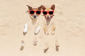 picture of toy dogs  - couple of two dogs buried in the sand at the beach on summer vacation holidays having fun and enjoying wearing red sunglasses - JPG