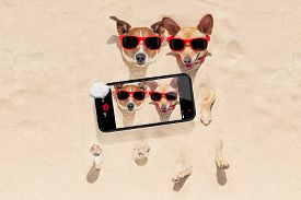 foto of selfie  - couple of two dogs buried in the sand at the beach on summer vacation holidays having fun taking a selfie with smartphone - JPG