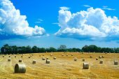 image of gleaning  - reaped field and straw rolls scenery in a farmland of southern sweden - JPG