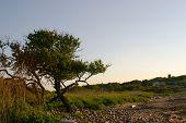Crooked Tree Horizontal