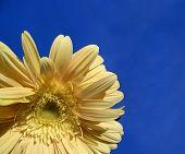 Sun-flower...(1)