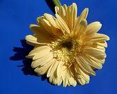 Sun-flower...(2)