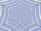 foto of spider web  - abstract spider web - JPG