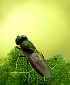 Fly......(9)