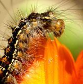 Caterpillar...(1)