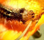 Caterpillar...(3)