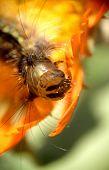 Caterpillar...(4)