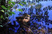 Plitvice Lakes, duck