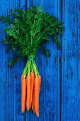 A Bunch Of Carrots. Fresh Raw Carrots With Stems. Garden Carrots On Colorful Blue Wooden Background poster