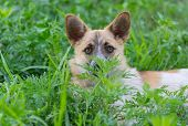 Portrait Of Cute Small Mixed Breed Dog Looking Out Of The Grass It Hiding poster