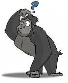 Confused Gorilla