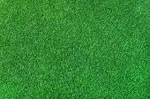Green Grass Background Of Artificial Green Lawn Grass On The Floor poster