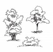 Set Of Hand Drawn Architect Tree And Bushes, Tree Silhouette, Dendrology Sketch Collection, Graphic  poster