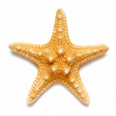 Little Starfish Yellow Color Isolated On White Background poster
