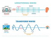 Longitudinal And Transverse Wave Type, Vector Illustration Scientific Diagram With Wave Structure An poster