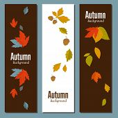 Banners Set Of Autumn Leaves Vector Illustration. Background With Hand Drawn Autumn Leaves. Design E poster