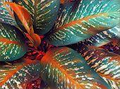 Tropical Foliage Plant In Sunny Garden. Summer Foliage Textured Digital Illustration. Natural Leaf O poster