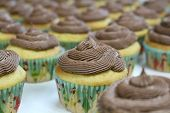 Delicious Handmade Brown Sugar Vanilla Cupcakes With Homemade Chocolate Butter Cream Frosting Sittin poster