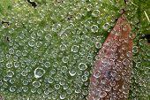 Bubbles3030
