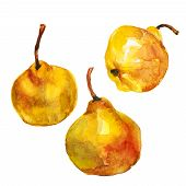 Watercolor Illustration Three Ripe Yellow Pears, Hand Drawing. Isolated On White Background. Waterco poster