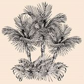 Tropical Card With Sketchy Palm Trees And Leaves. Oasis Scenery. Hand Drawn Vector Illustration Isol poster