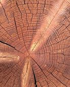 Closeup Of Round Slice Of Tree With Annual Rings. Sawn Pine Trunk With Textured Cracked Surface. Bui poster